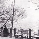 眉山神武天皇像広場の桜