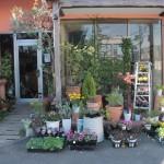 ギャラリー花杏豆 石井店